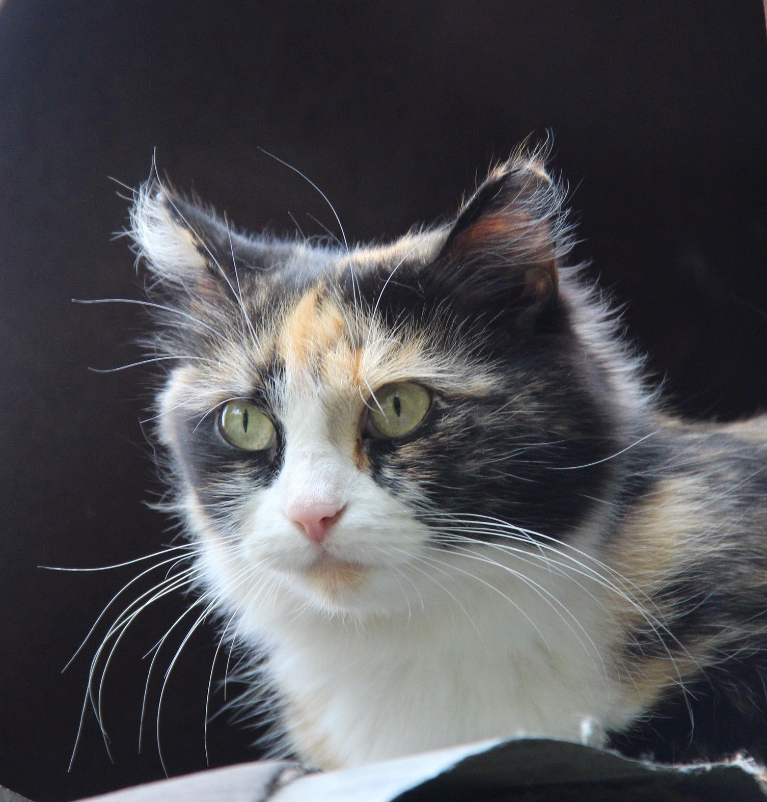 Why do cats have whiskers? And fun facts about cat's