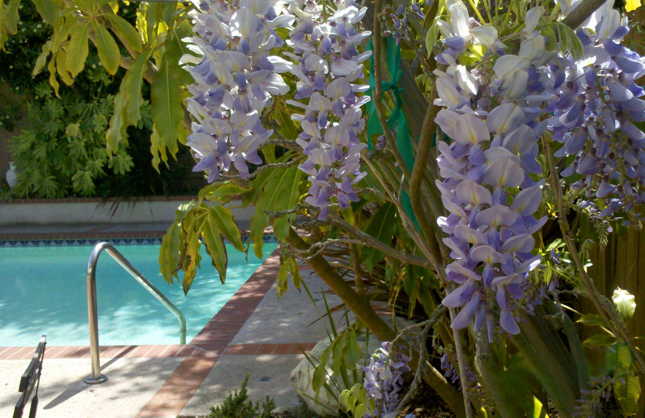 My Wisteria No Squirrels This Year Eating The Flower Buds Flower Bud Plants Flowers