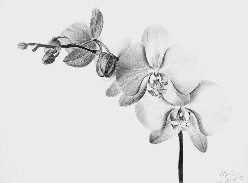 orchidee tatouages tatouage dessins de fleurs pour. Black Bedroom Furniture Sets. Home Design Ideas
