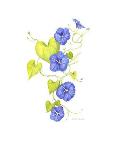 Morning Glory Rib Cage Morning Glory Tattoo Flower Vine Tattoos Blue Morning Glory