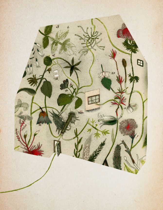 Sara Donati_Cover image for an illustrated herbal.
