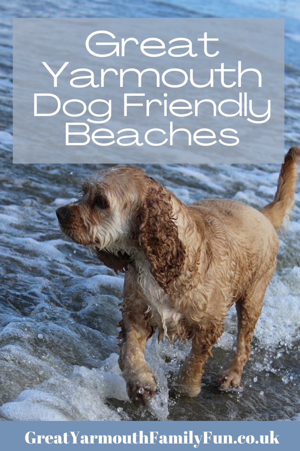 Great Yarmouth Dog Friendly Beaches In 2020 Dog Friendly Beach Yarmouth Great Yarmouth