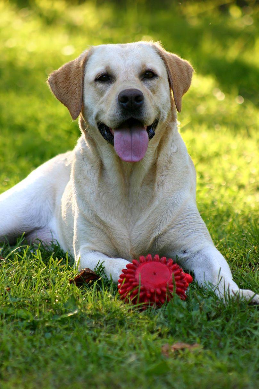 Bc spca basic dog training puppy training