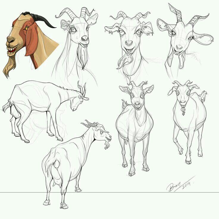 Capricorn | character design | goat | Pinterest | Cabras, Anatomía y ...
