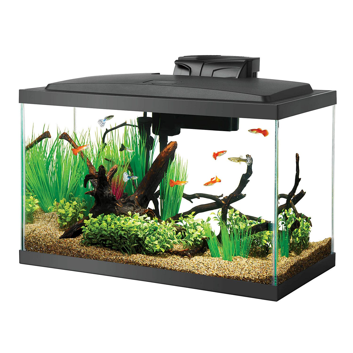 Aqueon 10 Gal Led Aquarium Kit 10 Gallon Fish Tank Aquarium Fish Tank Aquarium Fish