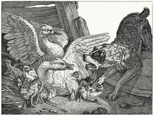 Mastiff pouncing on geese. Jean-Baptiste Hüet, from Les Hüet : Jean-Baptiste et ses trois fils (The Hüets: Jean-Baptiste and his three sons), by C. Gabillot, Paris, 1892. (Source: archive.org)