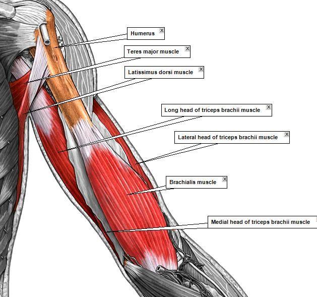 Pin von C mann auf muscles | Pinterest