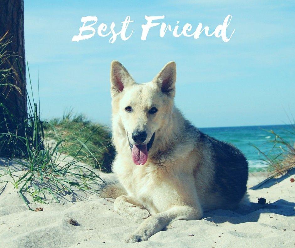 Happy National Dog Day! Happy national dog day, Dogs