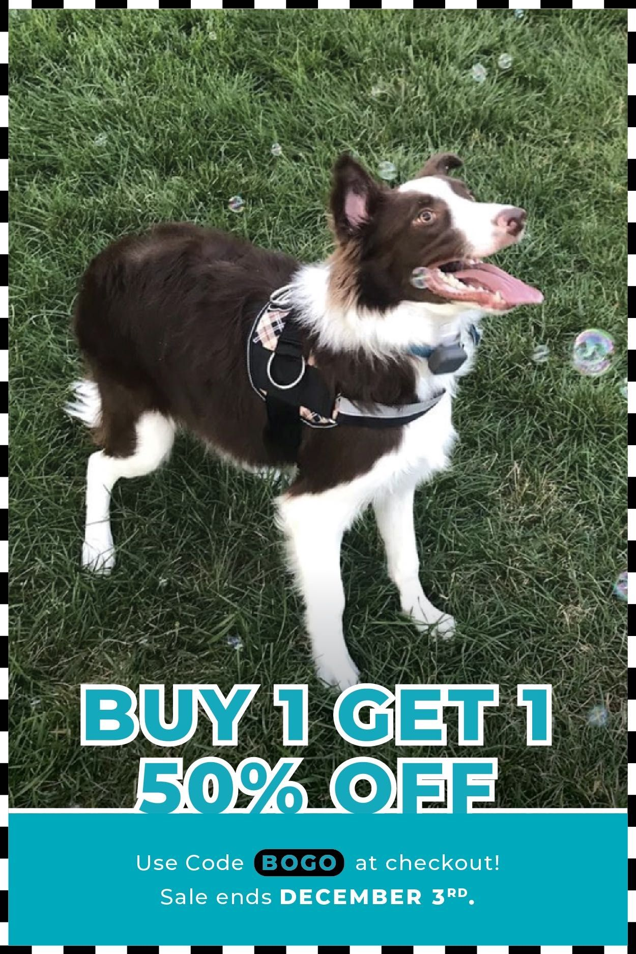 Every Purchase Helps A Rescue Dog In Need Buy Two Harnesses Get
