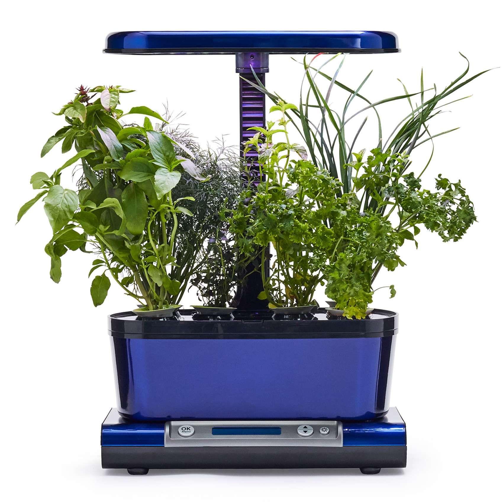 Aerogarden Harvest Wifi: AeroGarden Harvest Elite WiFi With Gourmet Herbs Seed Pod