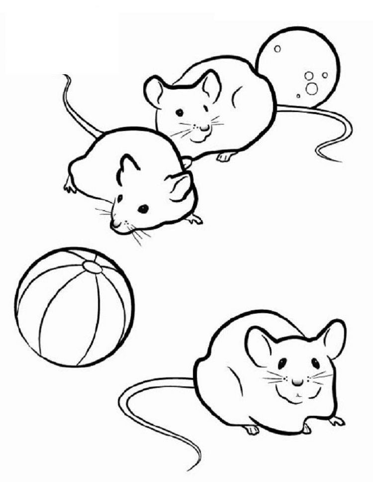 880 Top Coloring Pages Small Animals For Free
