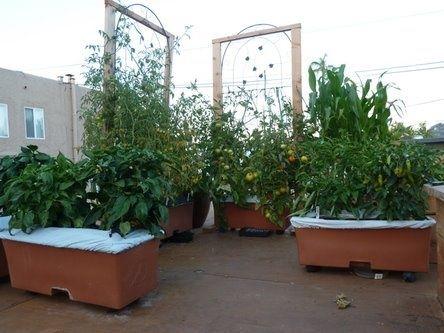 earthbox trellis | earthbox trellis