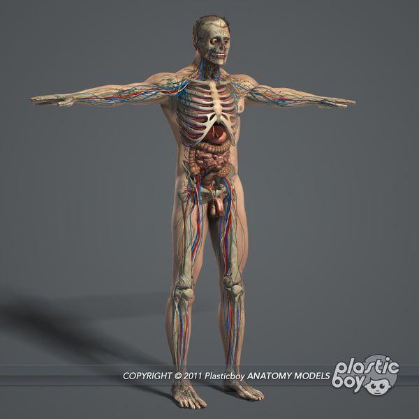 Essentials Male Female Anatomy 3d Model In 2020 Female Anatomy