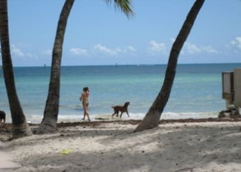 dog friendly activities in key west