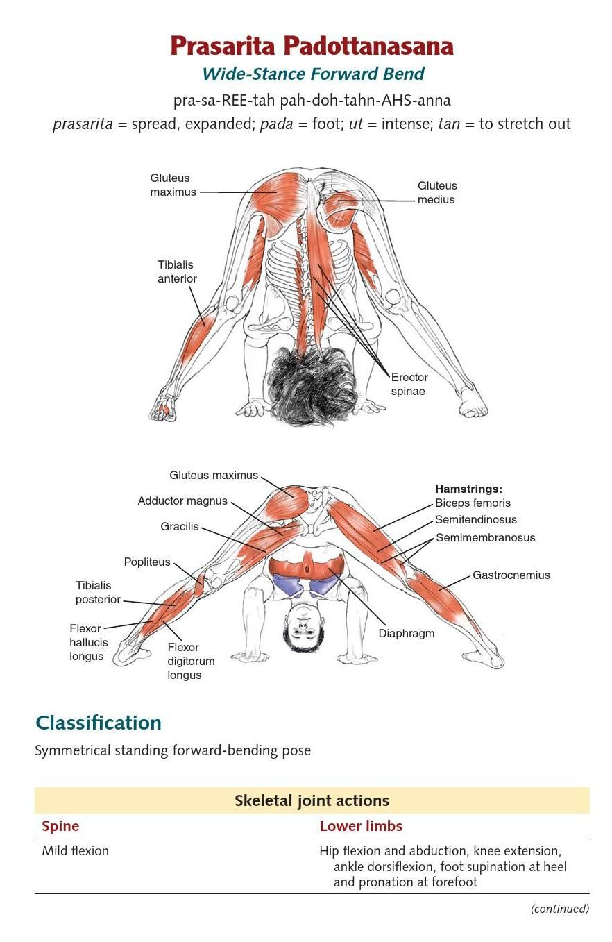 ClippedOnIssuu from Yoga Anatomy extended ed. by Lesie Kaminoff ...