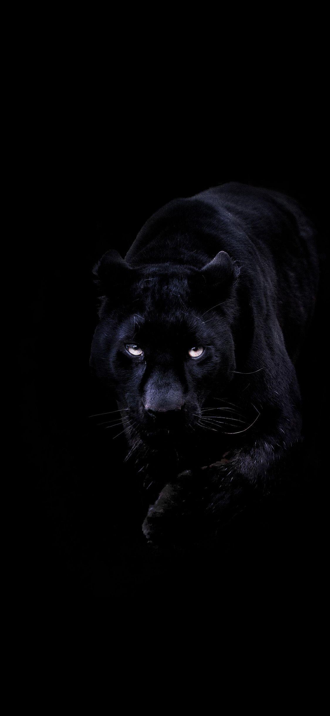 Black Panther Phone Wallpaper In 2020 Animal Wallpaper Cat Wallpaper Wild Animal Wallpaper