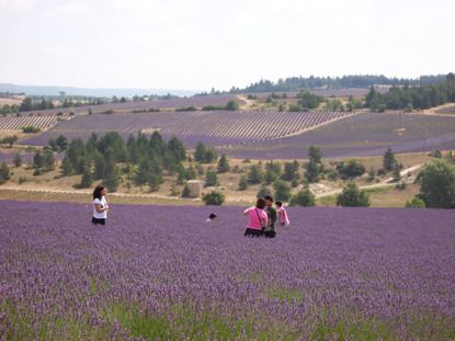 lavender ocean guided tour