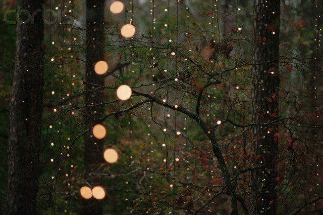 Fireflies Celestial Firefly Nature