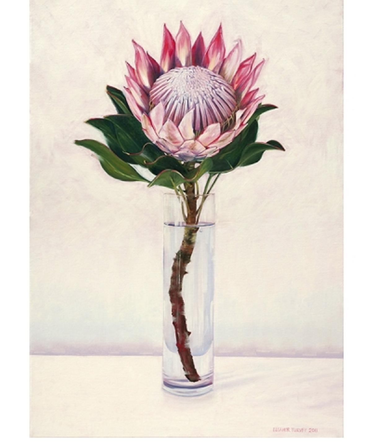 Protea Protea Art Flower Art Protea Flower