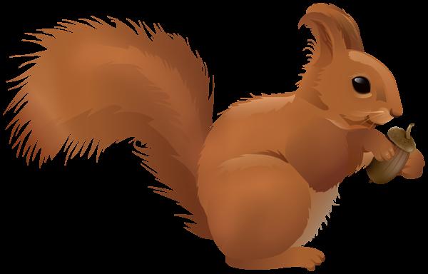 Squirrel Cartoon Png Clipart Cartoons Png Clip Art Squirrel