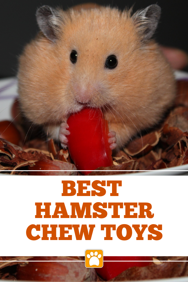 Best Chew Toys for Syrian Hamsters The Pet Supply Guy