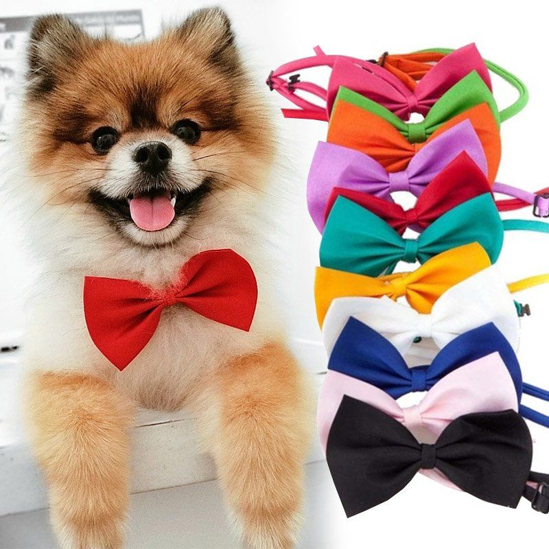 Bright and glittery dogcat bows and bowties for collar