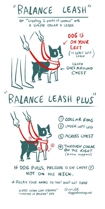 Posts About Ttouch On Boogie S Blog Dog Training Obedience Dog Care Working Dogs Breeds