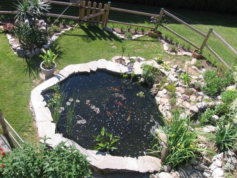 bassin de jardin Nature Bassin - La mare et le bassin de jardin
