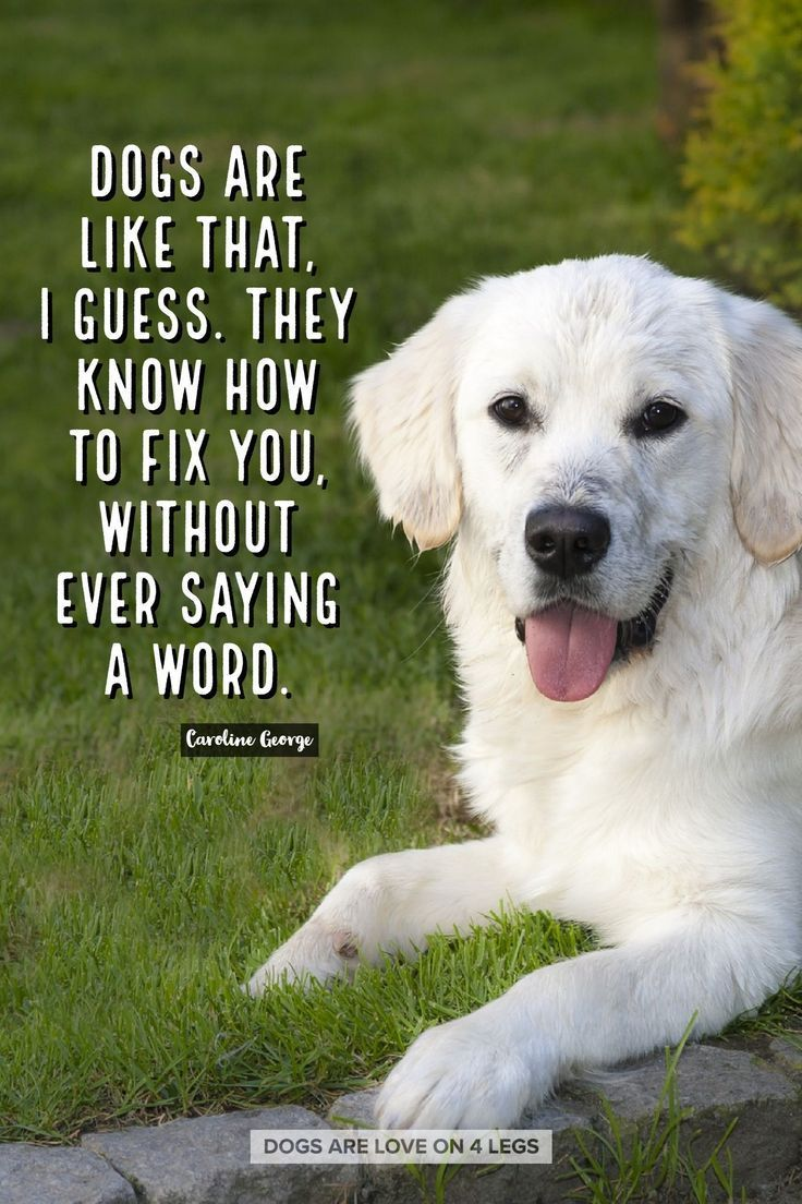 Funny Quotes Quotation Image Quotes About Funny Description Dogs Are Like That