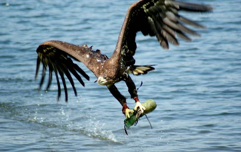 Eagle Catching Fish Perfectly Timed Snaps Pinterest Birds Of