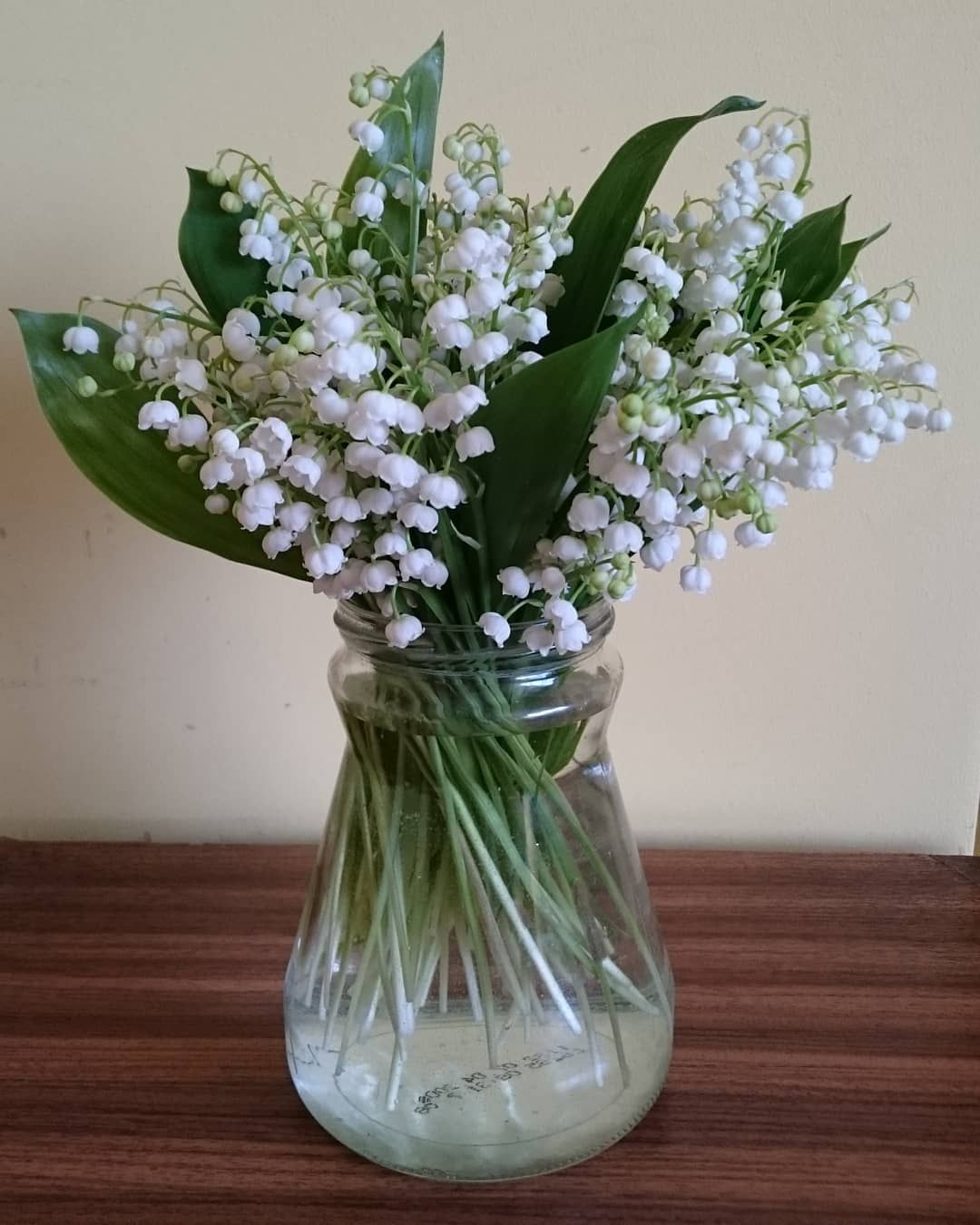 Lilies Of The Valley My Favourite Plants They Are Beautiful And Have Wonderful Smell Plant Plants Konwalie Konwalia L Lily Of The Valley Plants Flowers