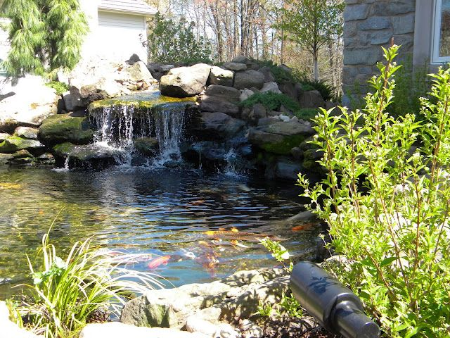 just finished this front yard with Koi pond   Pond ... on Front Yard Pond  id=34078