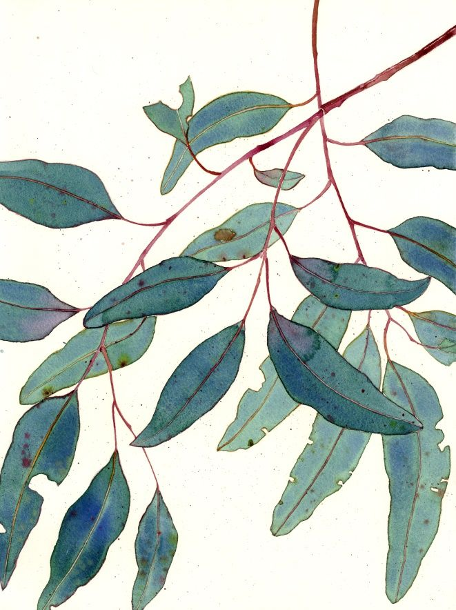 Eucalypt: original watercolour on paper NB: this image is unframed. If in Sydney, framing can be arranged at cost price