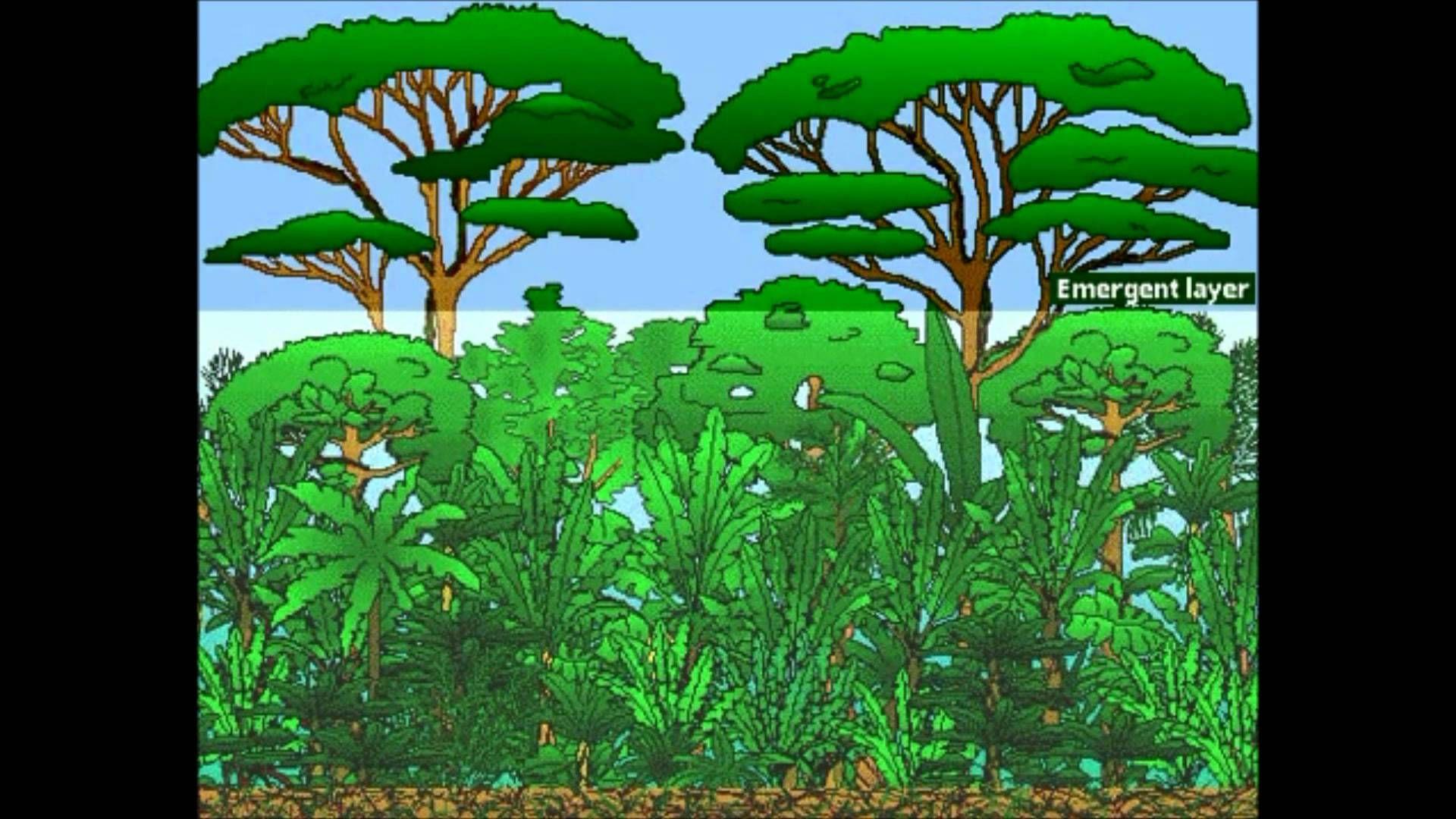 Layers Of Rainforest 3d Fixed Quiz Classroom
