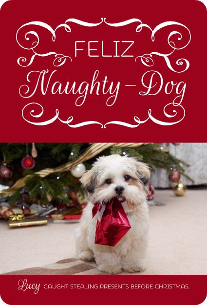 feliz naughty dog christmas photo card by purpletrailcom plus dog holiday card sayings and wording ideas - Dog Holiday Cards
