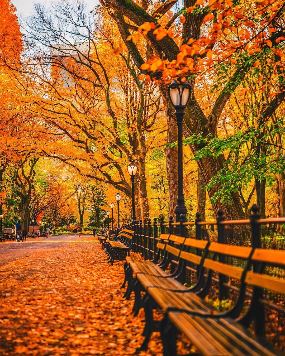 Central Park NYC Fall Favorites
