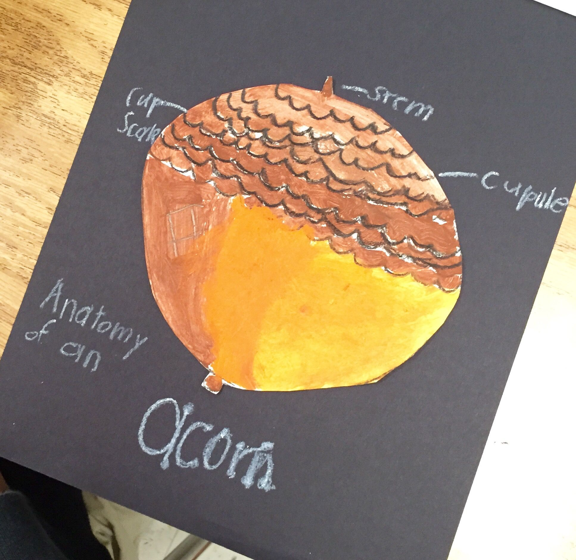 Anatomy of an Acorn | ART THEMES: Fall | Pinterest