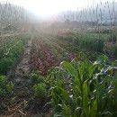 El Agroecosistema en la Agroecología ecoagricultor.com