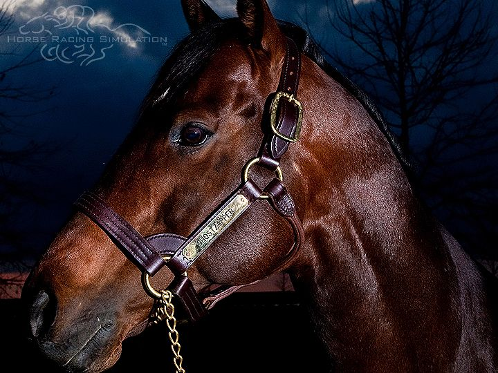 """Ghostzapper """"The most consistently fast horse of all time"""