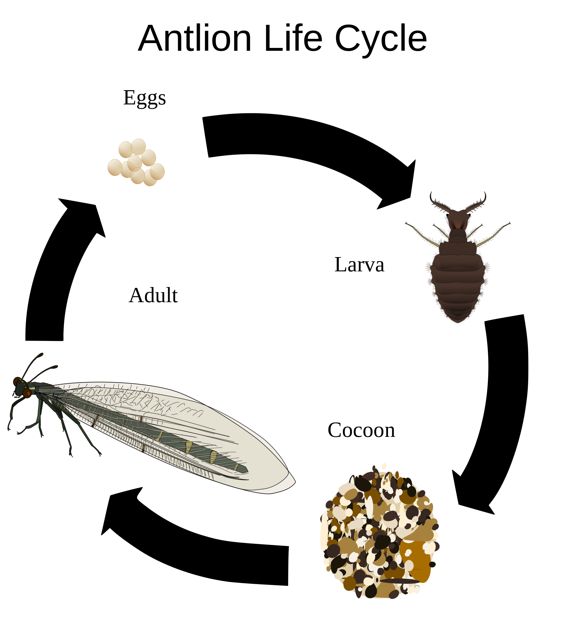 Bug Observation Worksheet