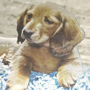 Vintage 60s 70s Long Haired Dachshund Puppy Dog Framed Picture