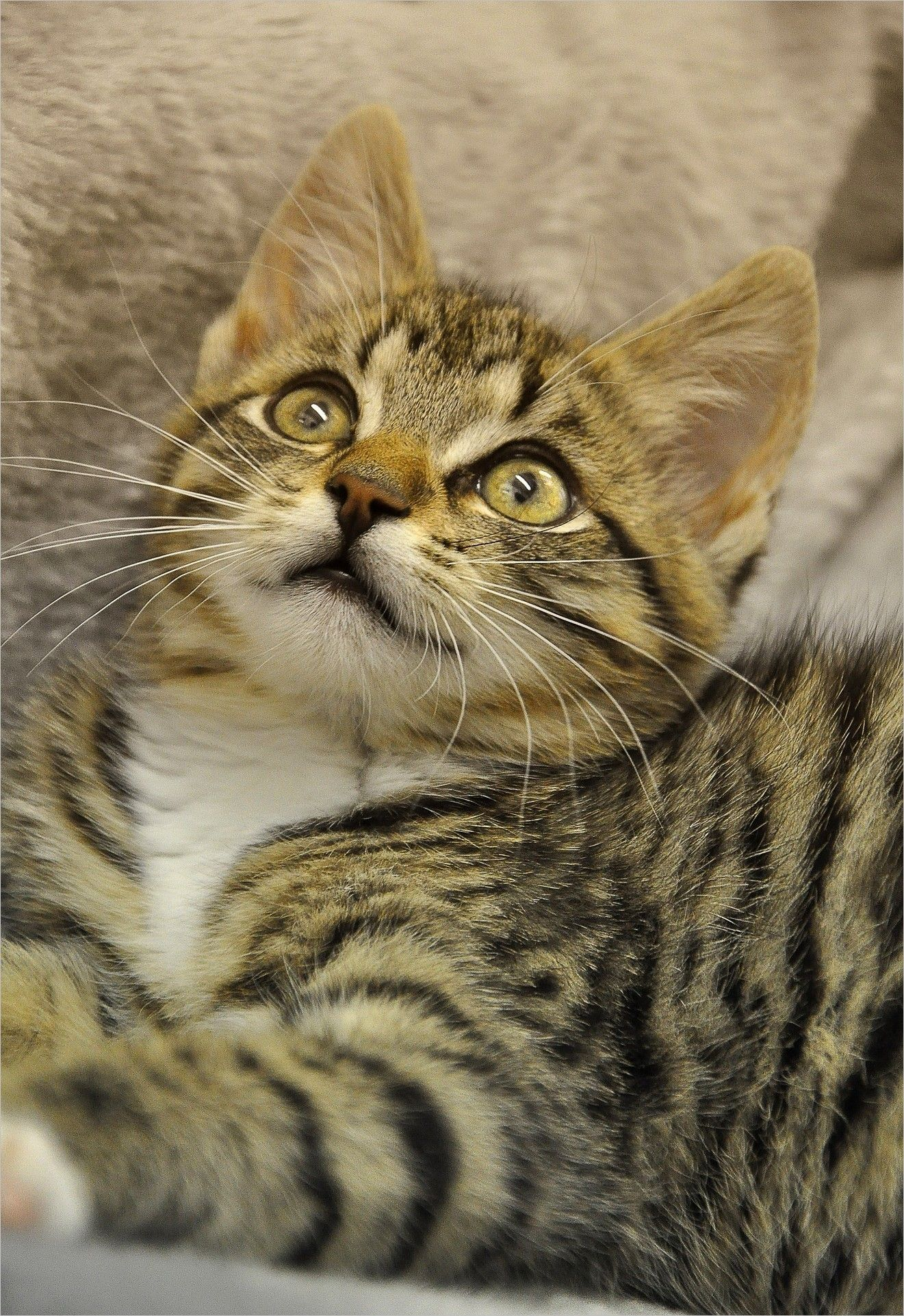 Cat Pictures img Cat Eyes cat mieze mackerel pet hangover