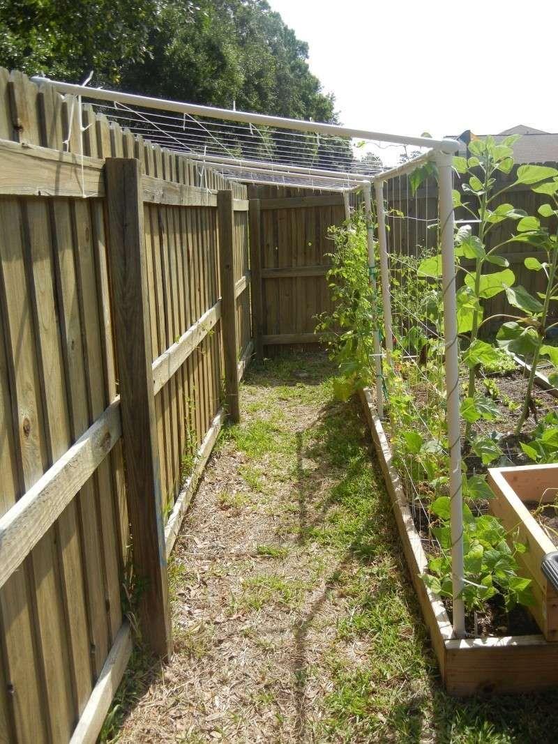 DIY pvc trellis #Vegetablegardens | Gardening Tips & Inspiration ...