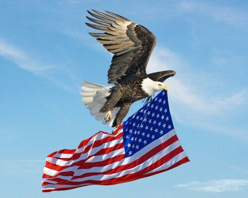 Eagle Carrying Flag Bald Eagle Eagle Pictures Eagles