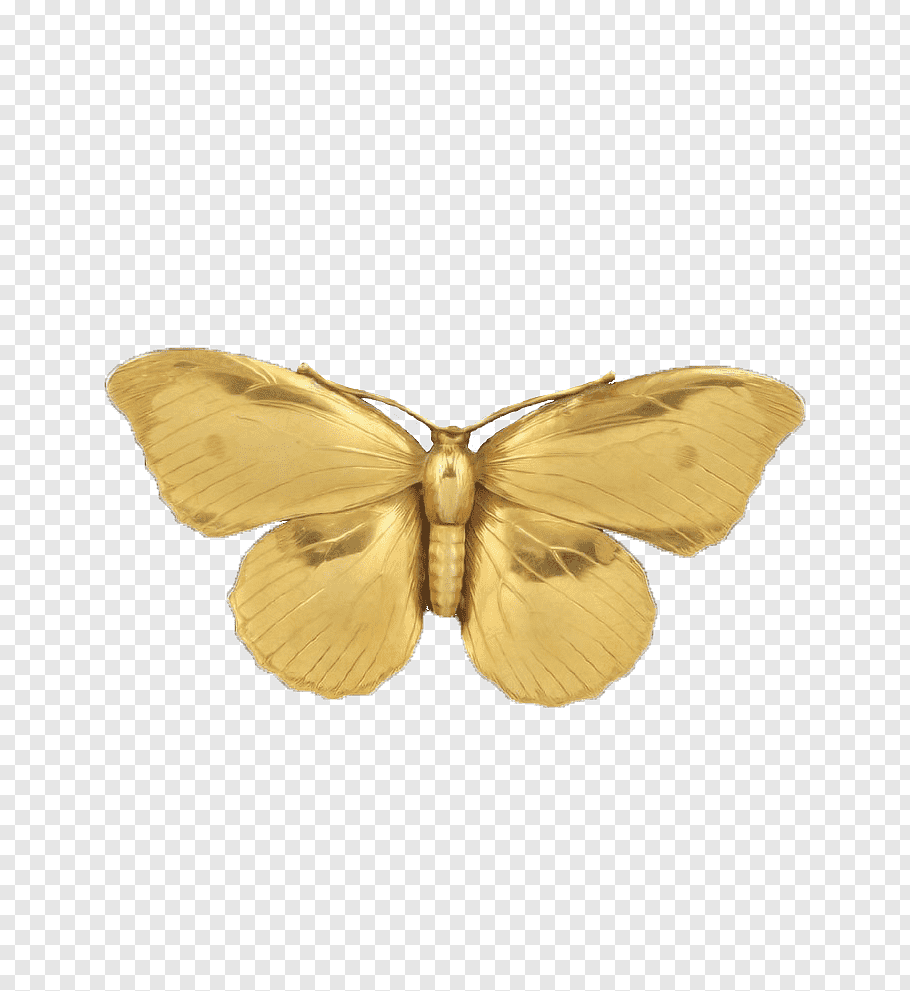 Golden Touch Gold Butterfly Pendant Png Butterfly Illustration Gold Butterfly Rose Illustration