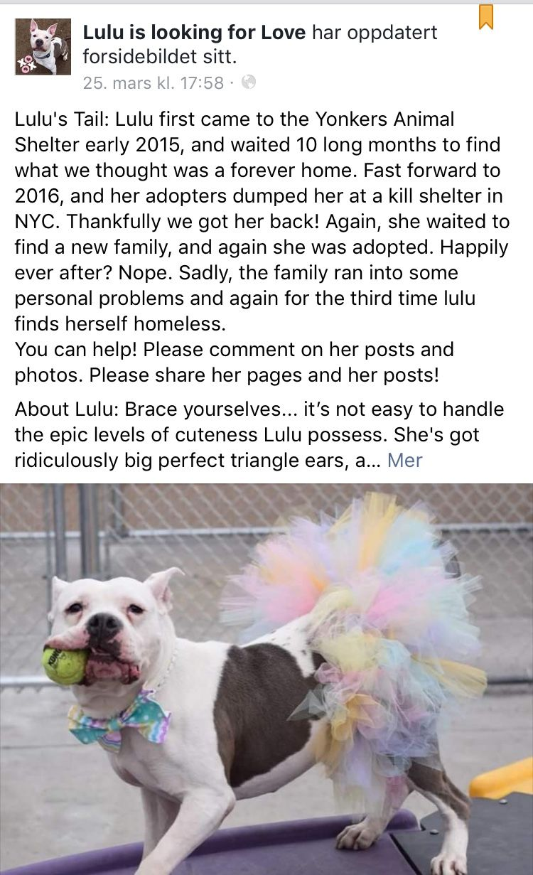 Pin on WILL YOU ADOPT ME? SIGNED, RESCUE PET