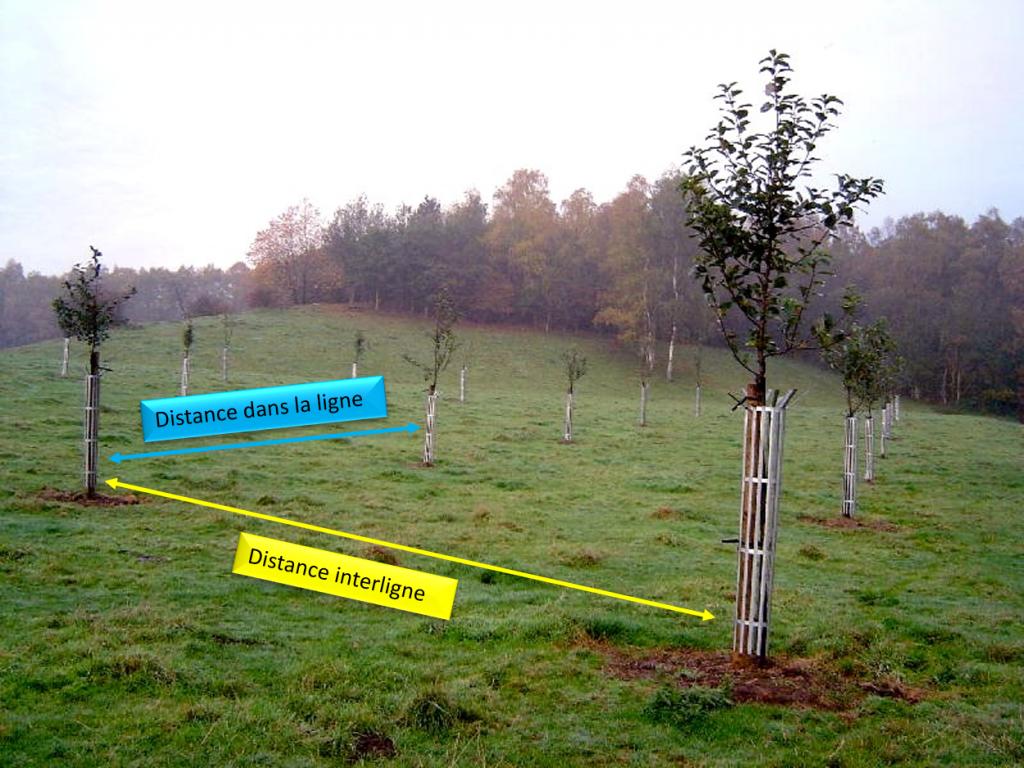 Distance de plantation pour un verger en haute tiges planter un verger chez vous pinterest - Distance plantation arbre maison ...