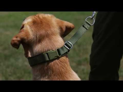 New Keeper Collars Hidden Prong Collars Youtube Prong Collar Collars Dog Training