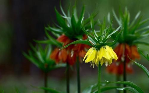 gunera:  (via grouse_flowers_blur_close-up_flowerbed)