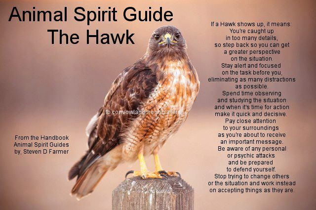 The Hawk Is My In Front Of Totemspirit Guide American Indian